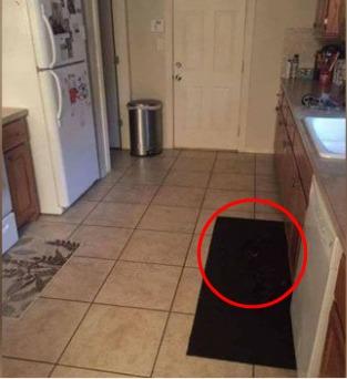 dog blends into mat