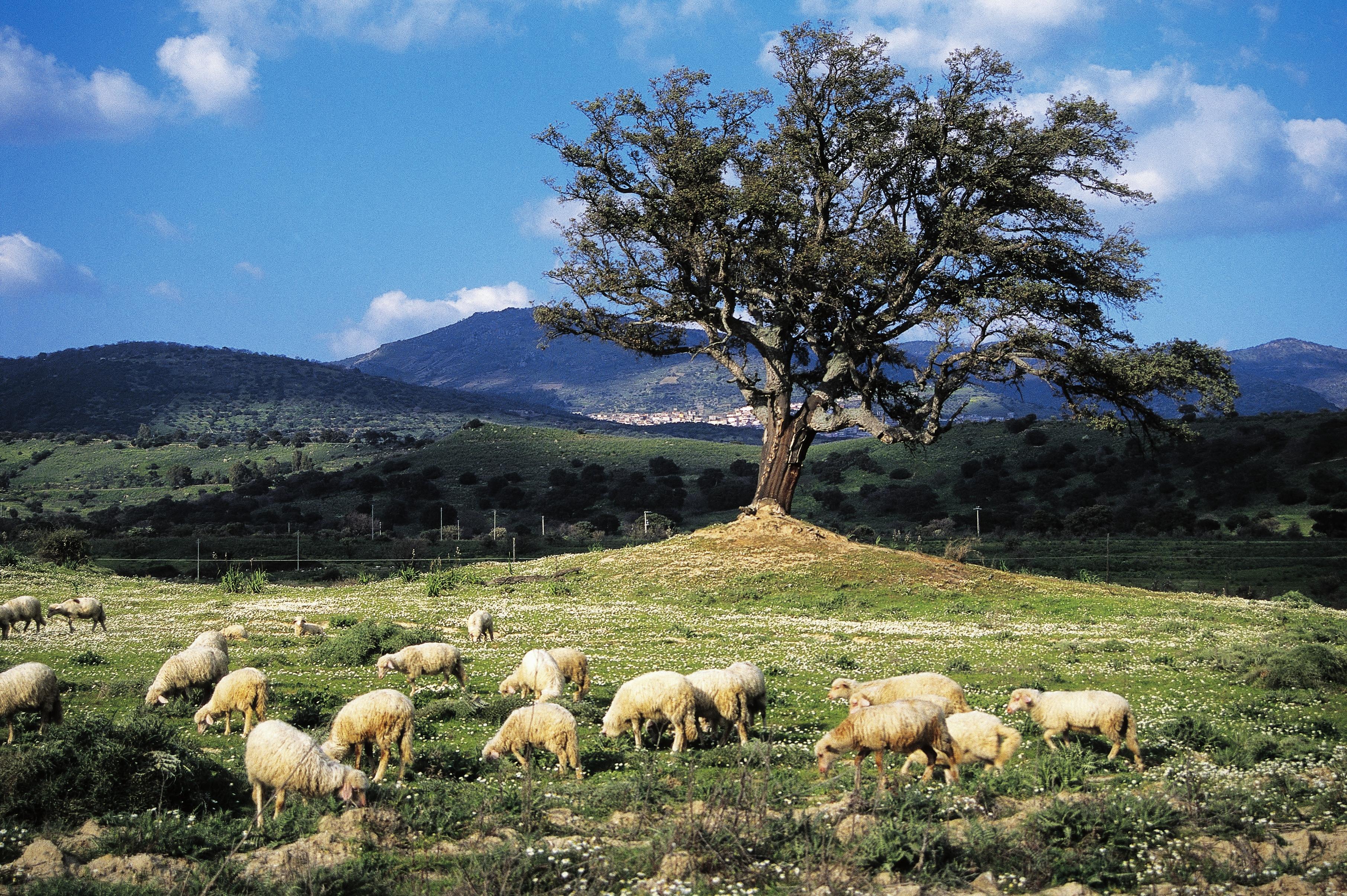 Sardinia land