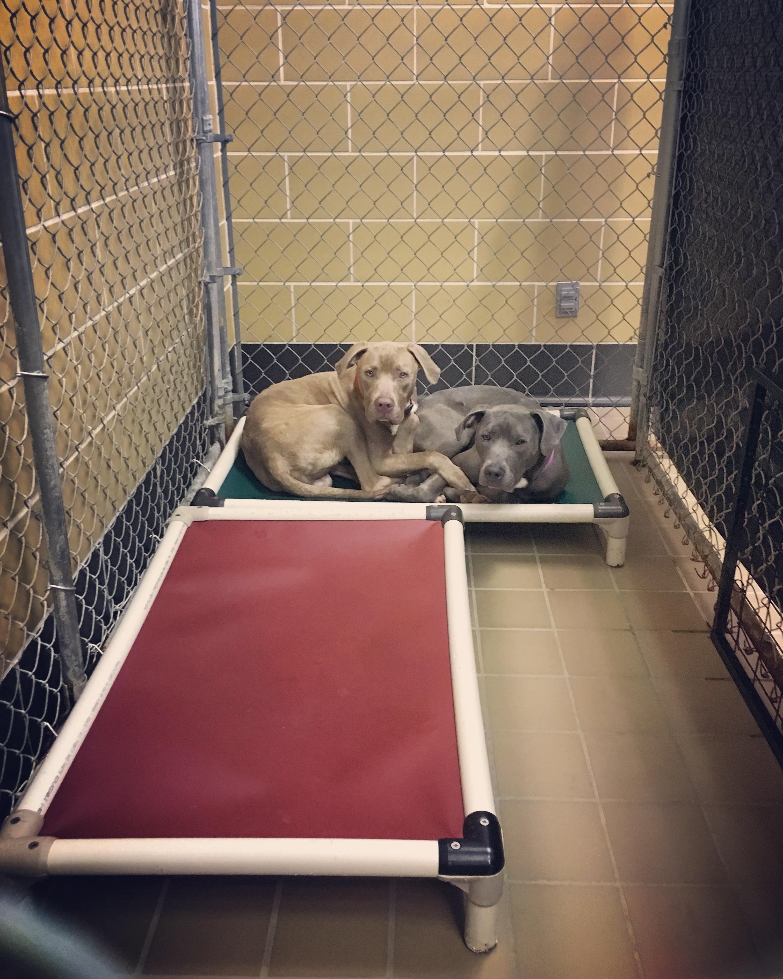 Hank and Gigi