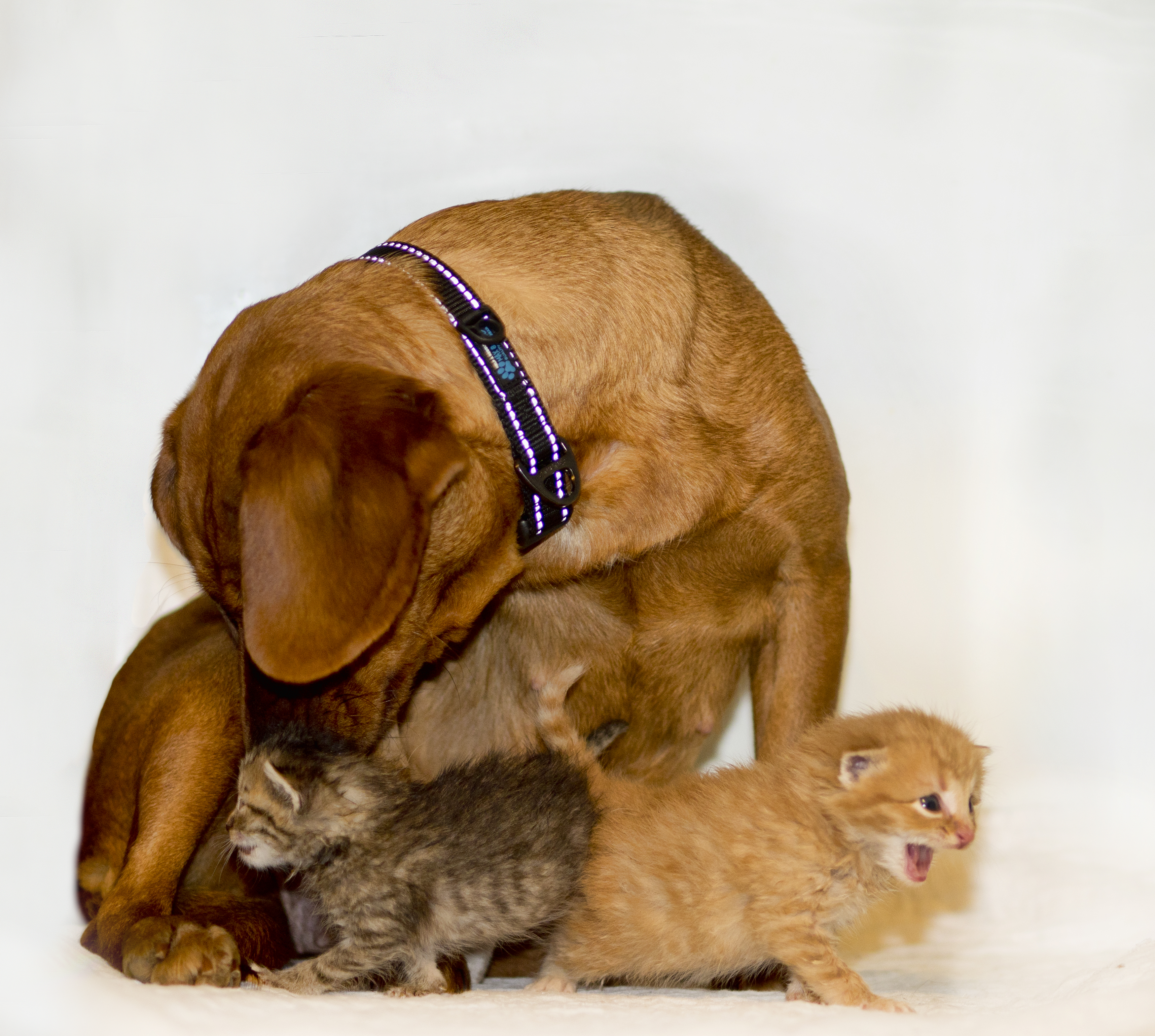 Momma Dog