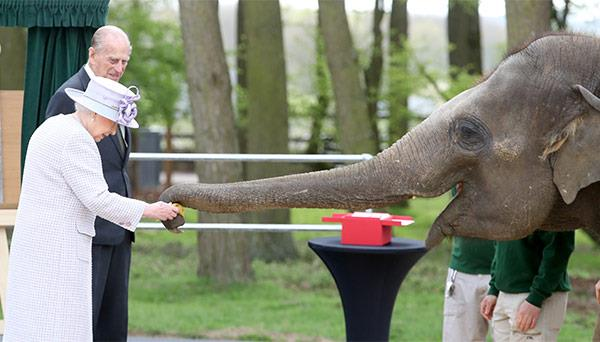 Chris Jackson Getty Elephant