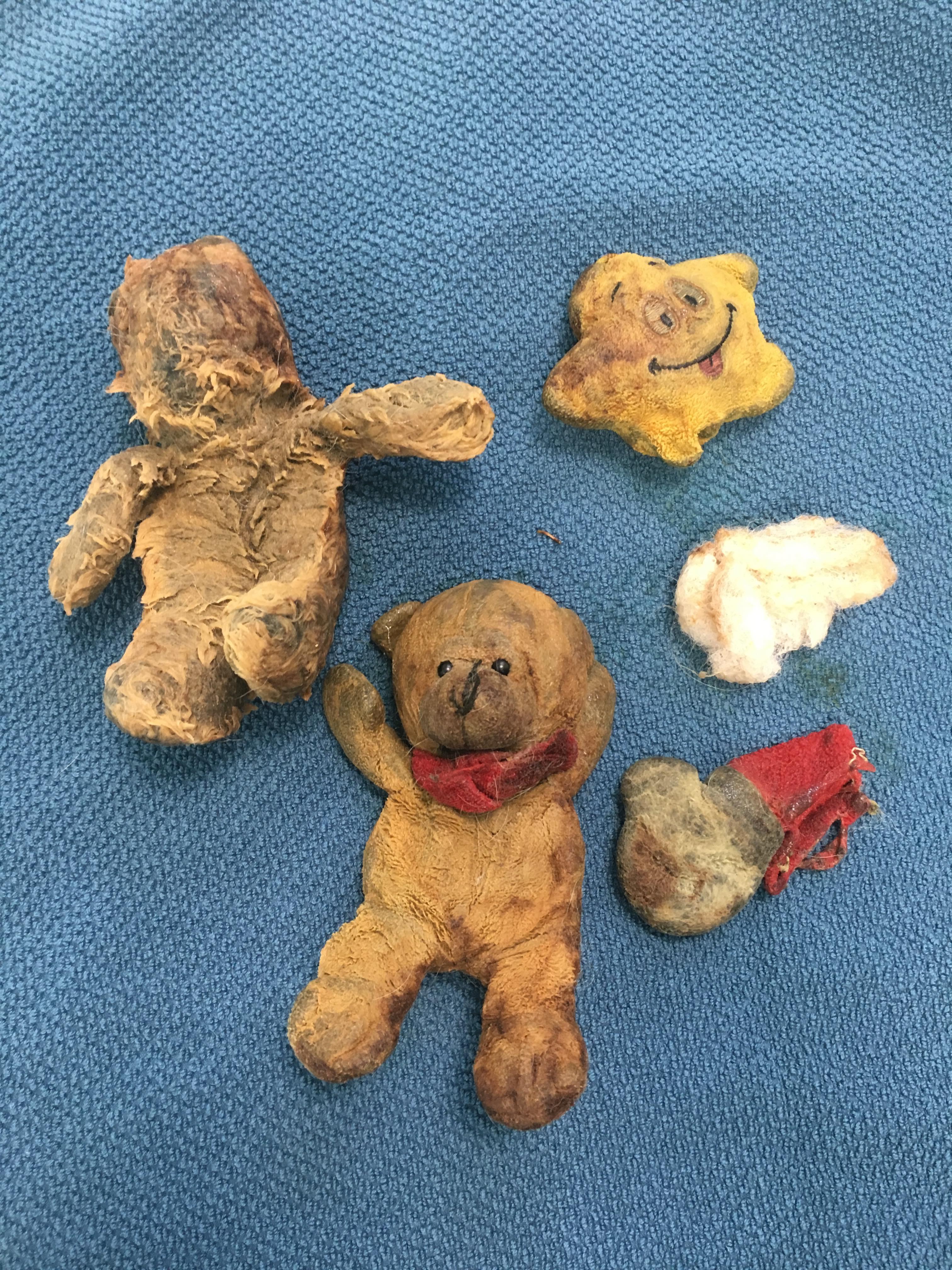 Maisy St Bernard Teddy Bears