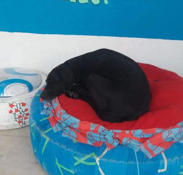 Negro Dog Pays for Treats
