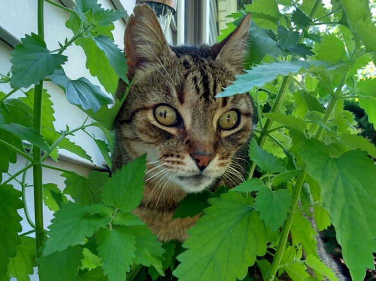cat reacts to catnip