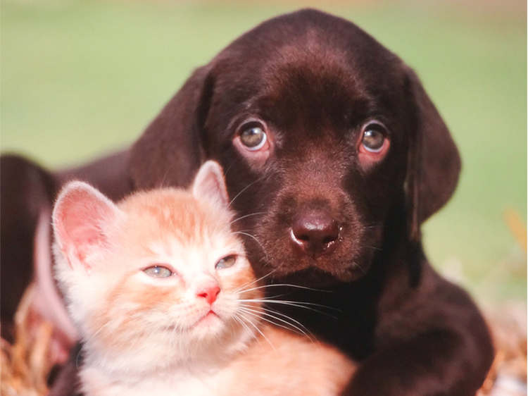 cats and dogs cute