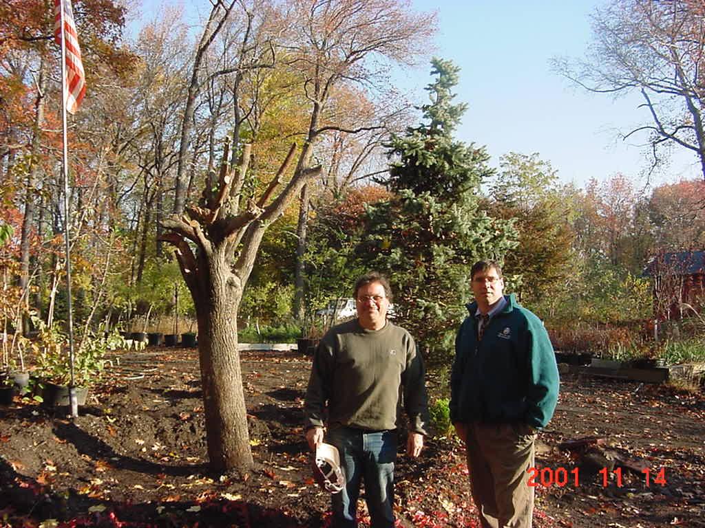 9/11 Survivor Tree Callery Pear Getty