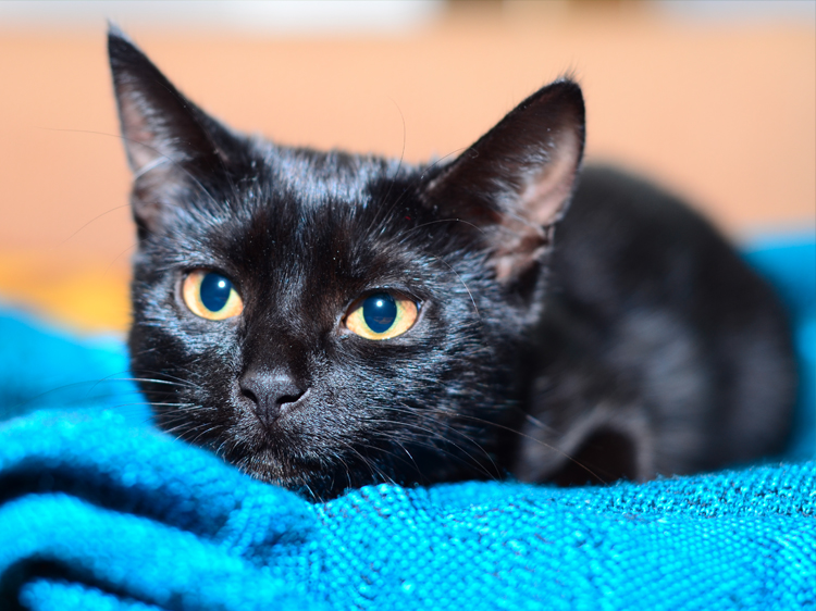 Photos Of Cute Black Cats Prove They Re Anything But Unlucky