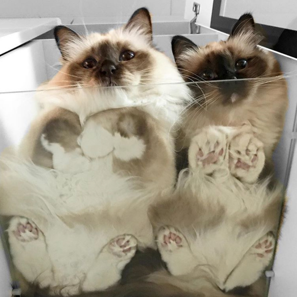 Image result for cats and glass tables