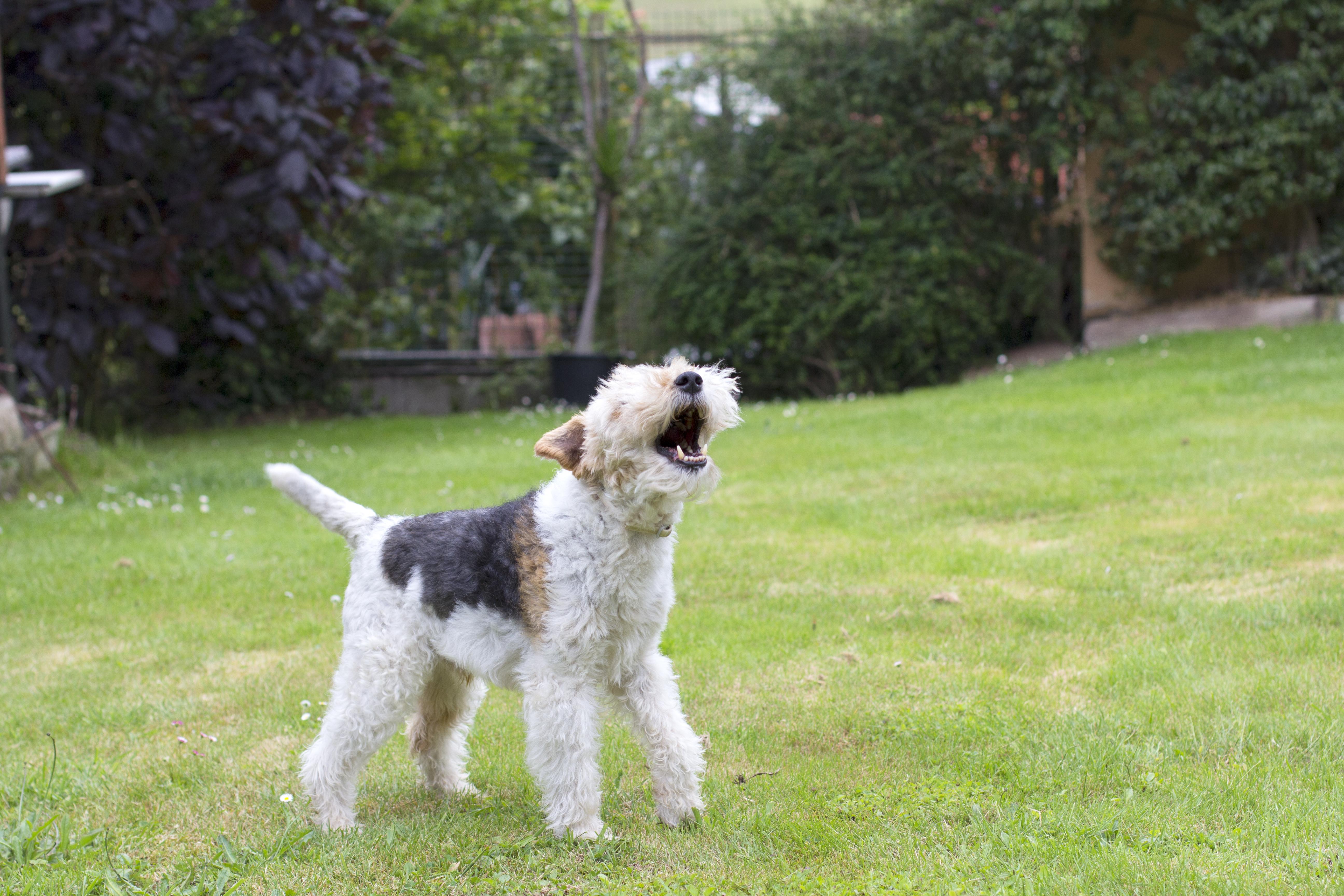 dog barks meaning