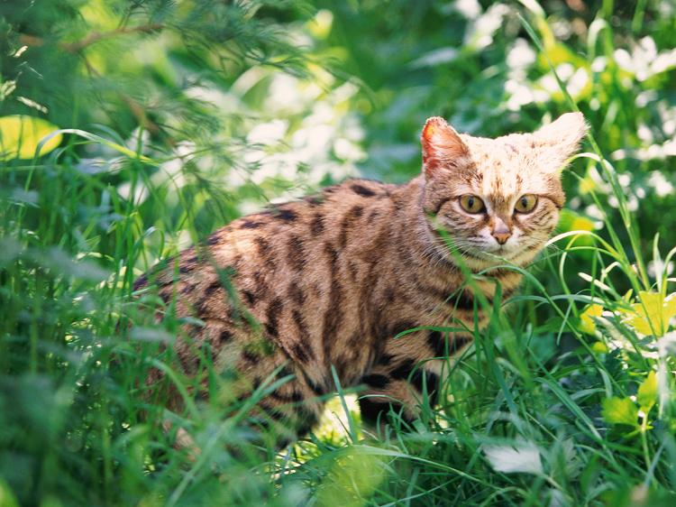worlds deadliest cats