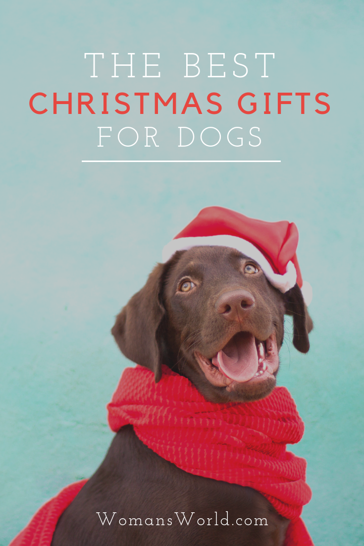 Best Dog Christmas Gifts