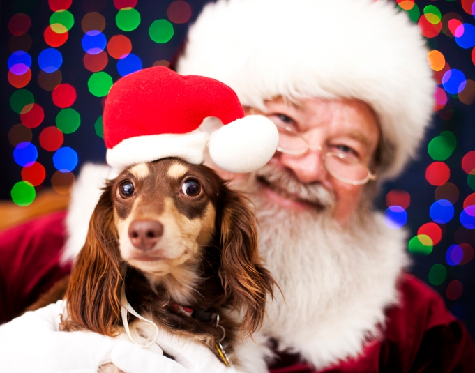 Take Your Pet to PetSmart for a Free Photo With Santa