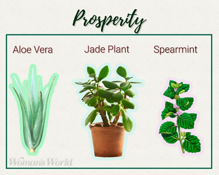 prosperity plants