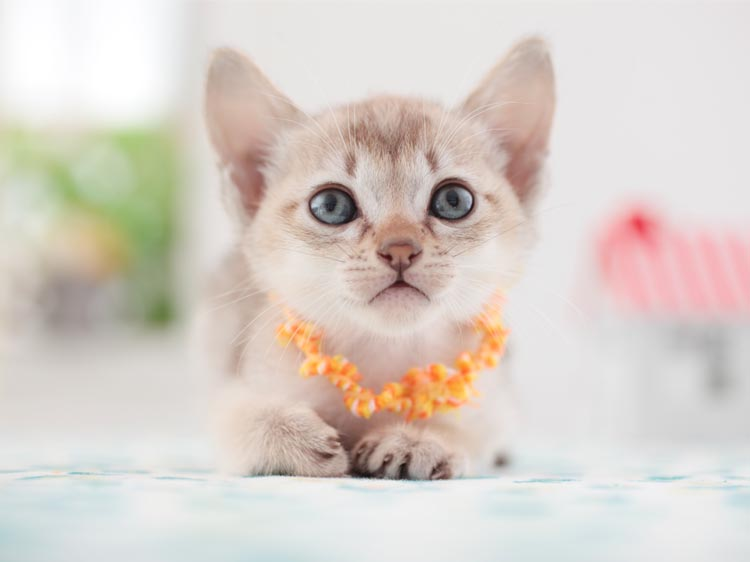 The 5 Smallest Cat Breeds Are Time
