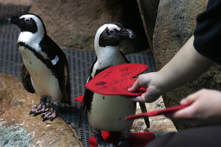 penguins valentines day