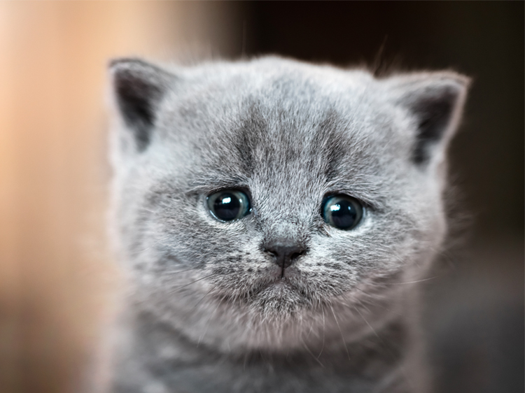 Photos of Sad Cat Eyes That Are Impossible to Say 'No' To