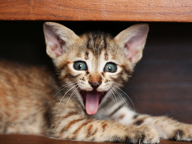 The Best Funny Cat Faces That Ll Make Your Day