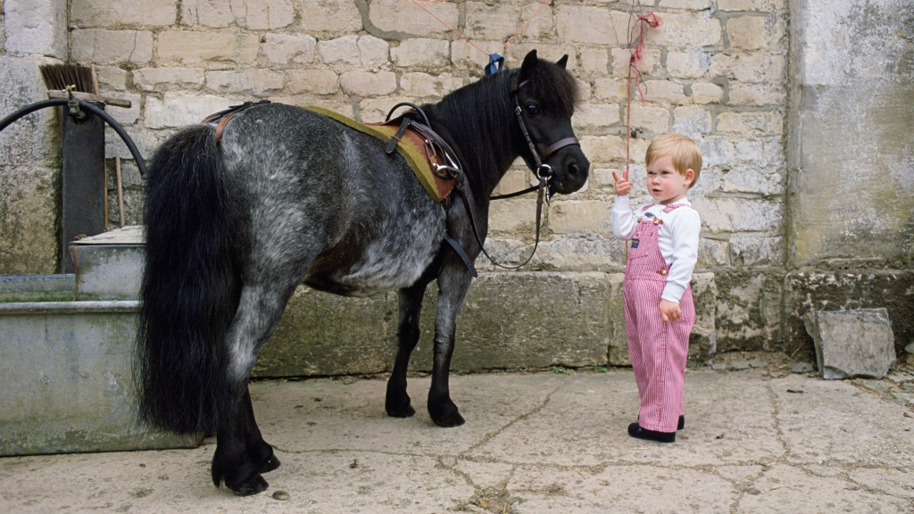 Toddler Prince Harry with a small horse