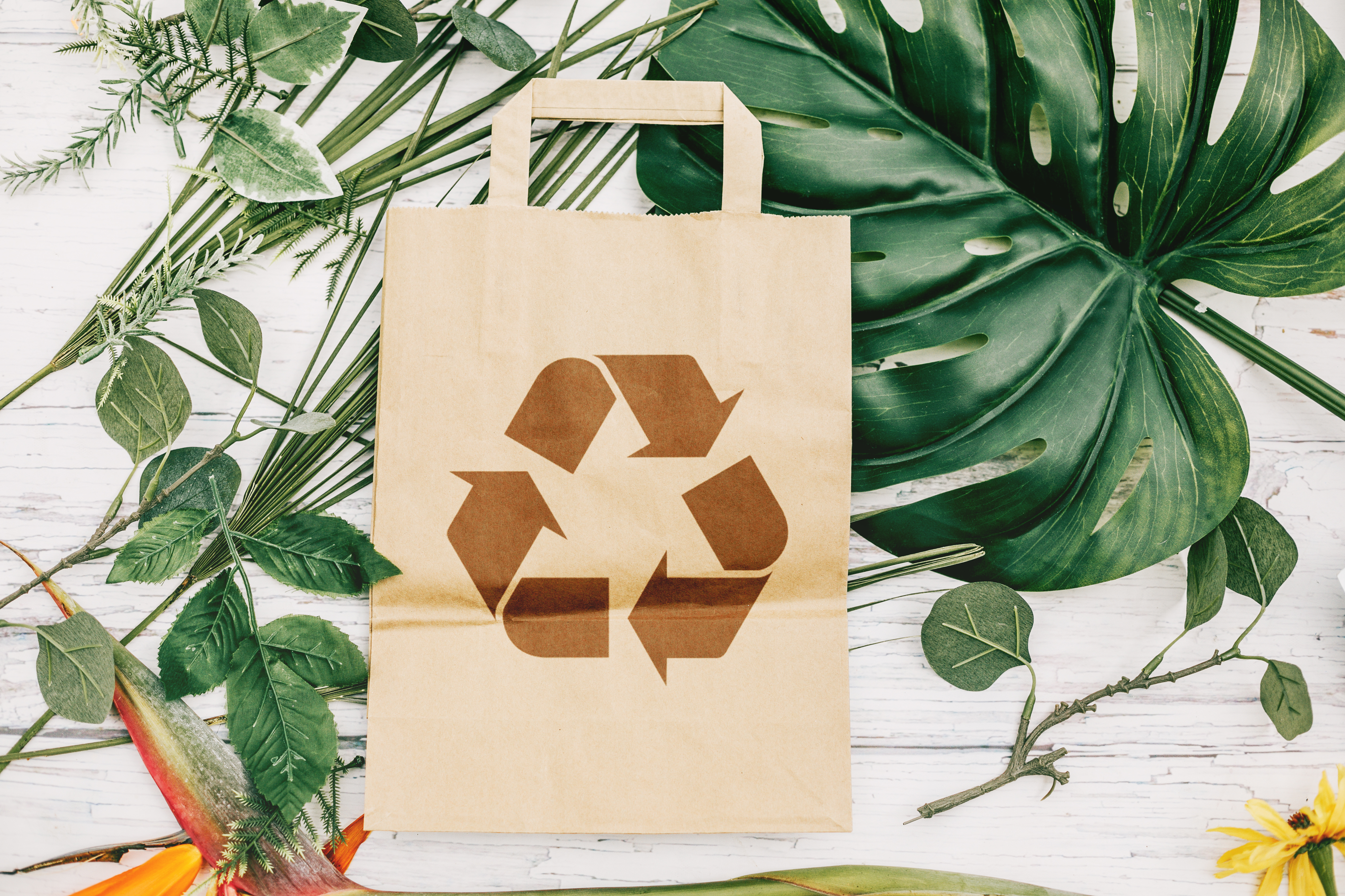 Recycling 101: The Dos and Don'ts - Woman's World