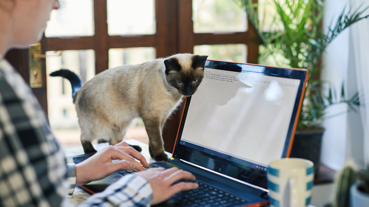 Why Do Cats Love Computer Keyboards?