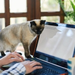 Cat nuzzling up to her owner's keyboard