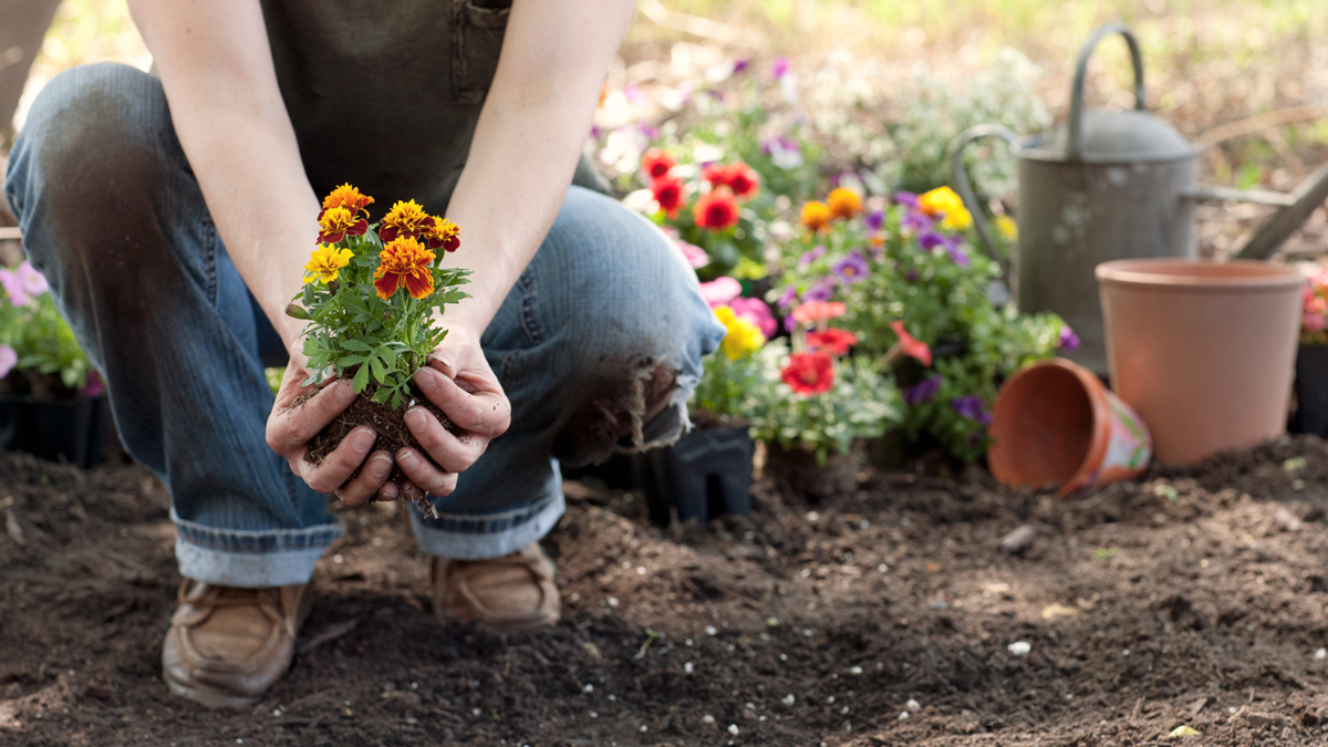 6 Plants You Should Have in Your Garden to Ward Off Pesky Mosquitos