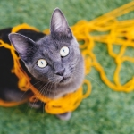 Cat with wide eyes and messy yellow yarn