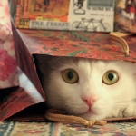 White cat peeking out of gift bag