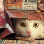 White cat peeking out of gift bag