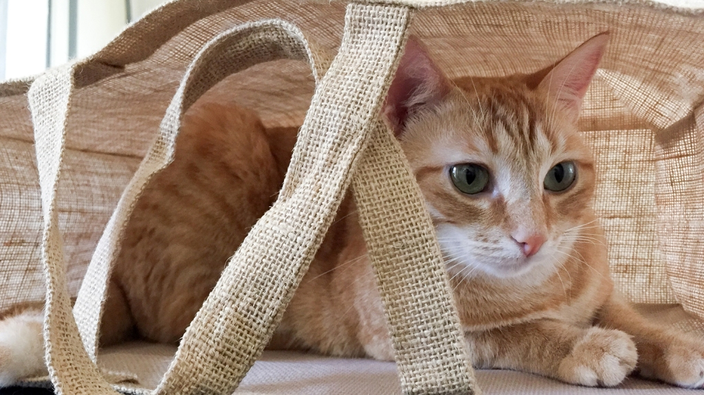 Orange cat inside linen totebag
