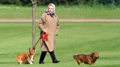 Queen Elizabeth walking with two corgis