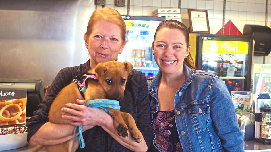 helping rescue dogs find homes