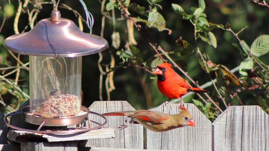 The Best Bird Feeders that Keep Sneaky Squirrels Away