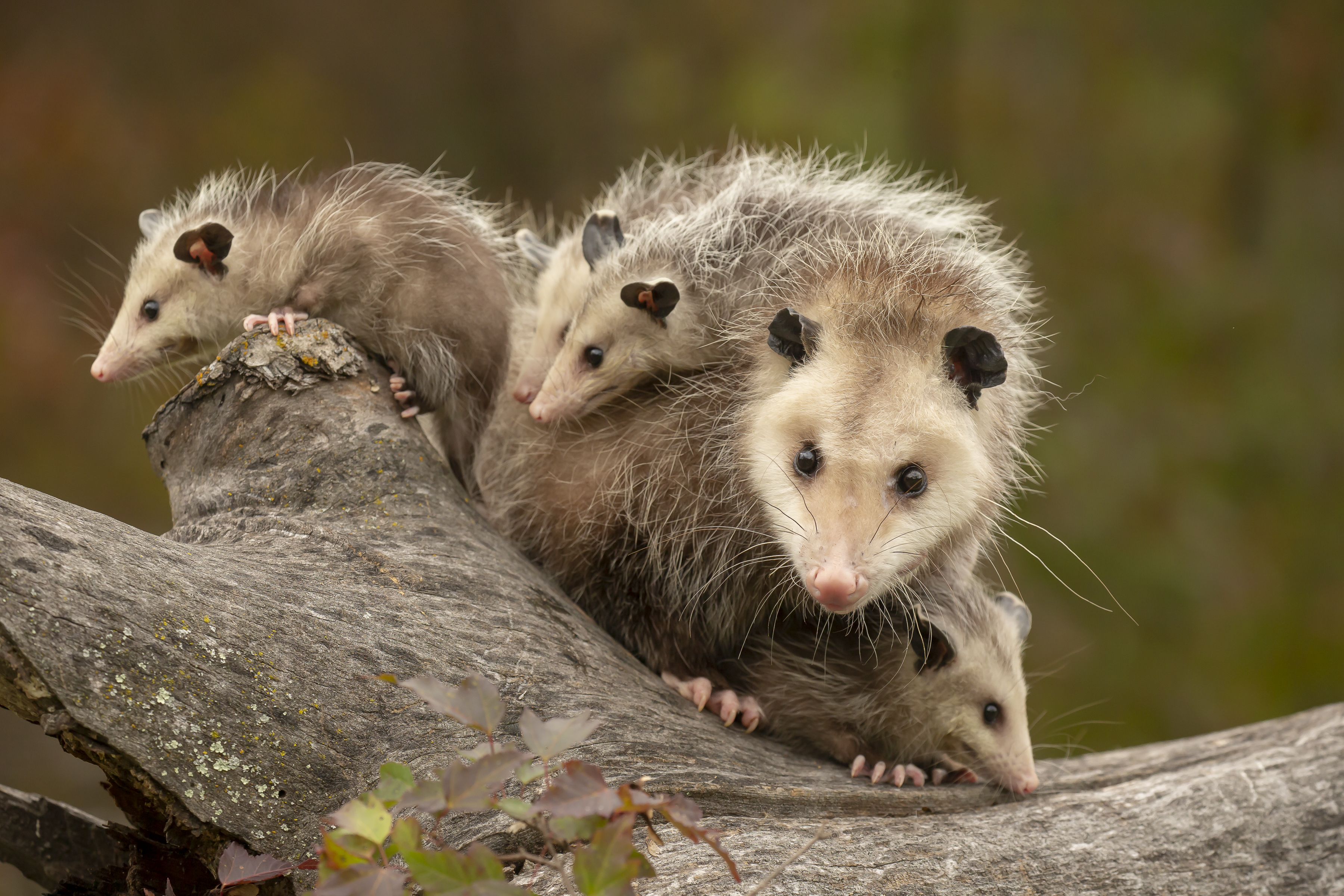How to Successfully Possum Proof Your Garden and Keep it Safe