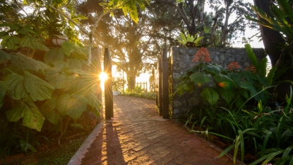 Garden with sunlight streaming through gate
