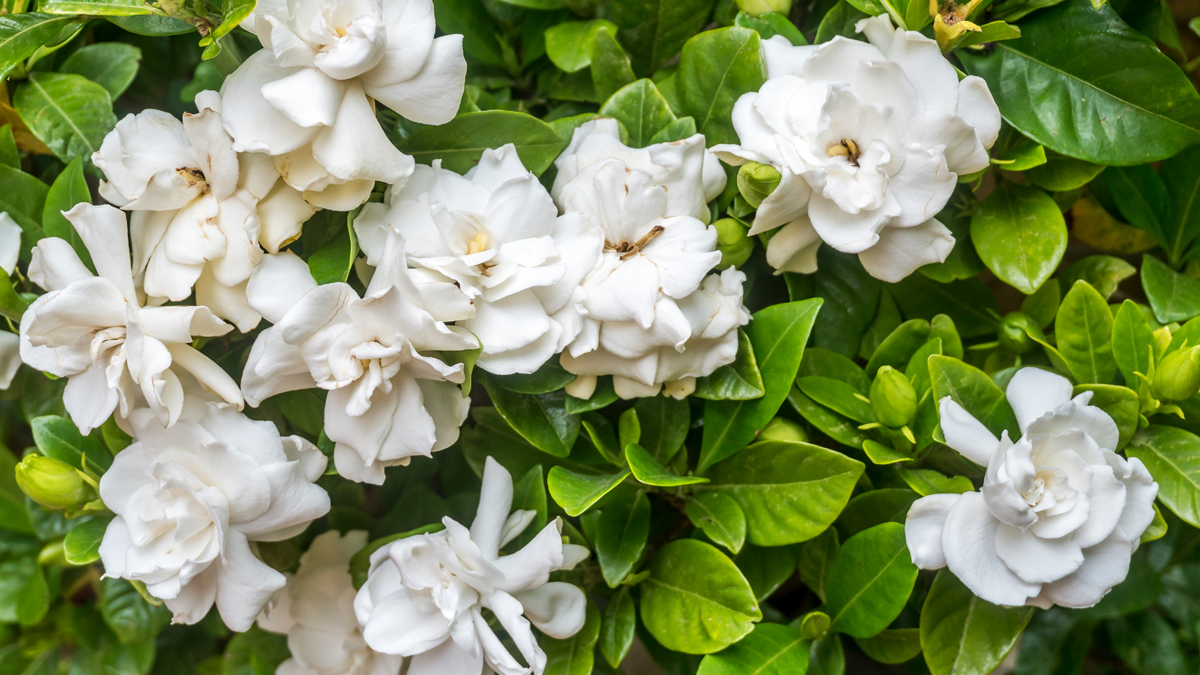 The Healing Power of Flowers Can Ease Joint Pain, Cool Hot Flashes, and Help You Sleep Better