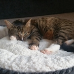 cat sleeping in a cat bed