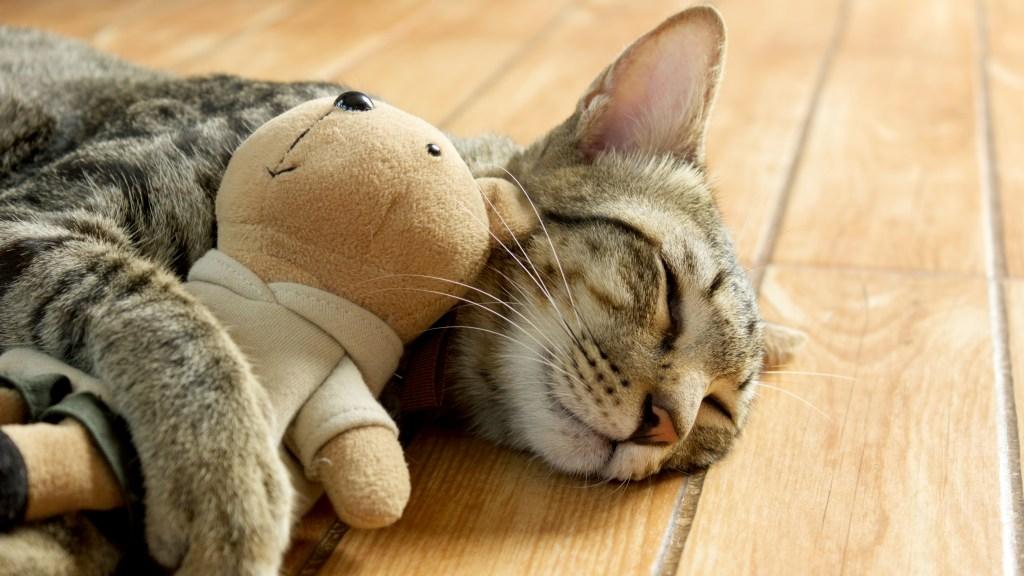 Tabby hugging teddy bear
