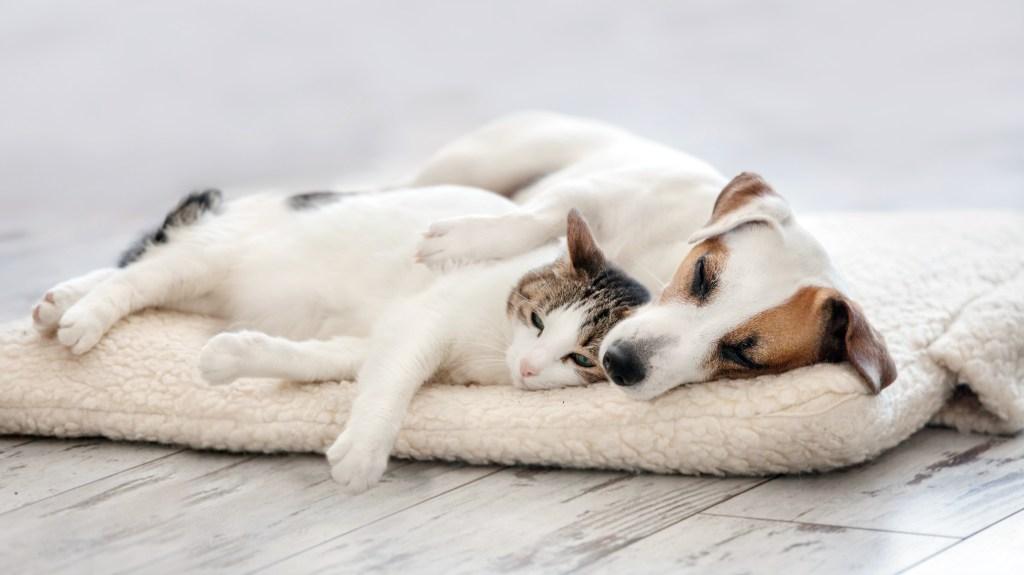 Dog hugging cat