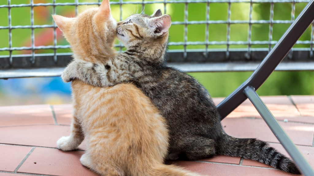 Small tabby cat hugging small orange cat