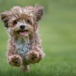 cute puppy leaping in the grass