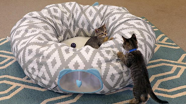 walmart tunnel cat bed