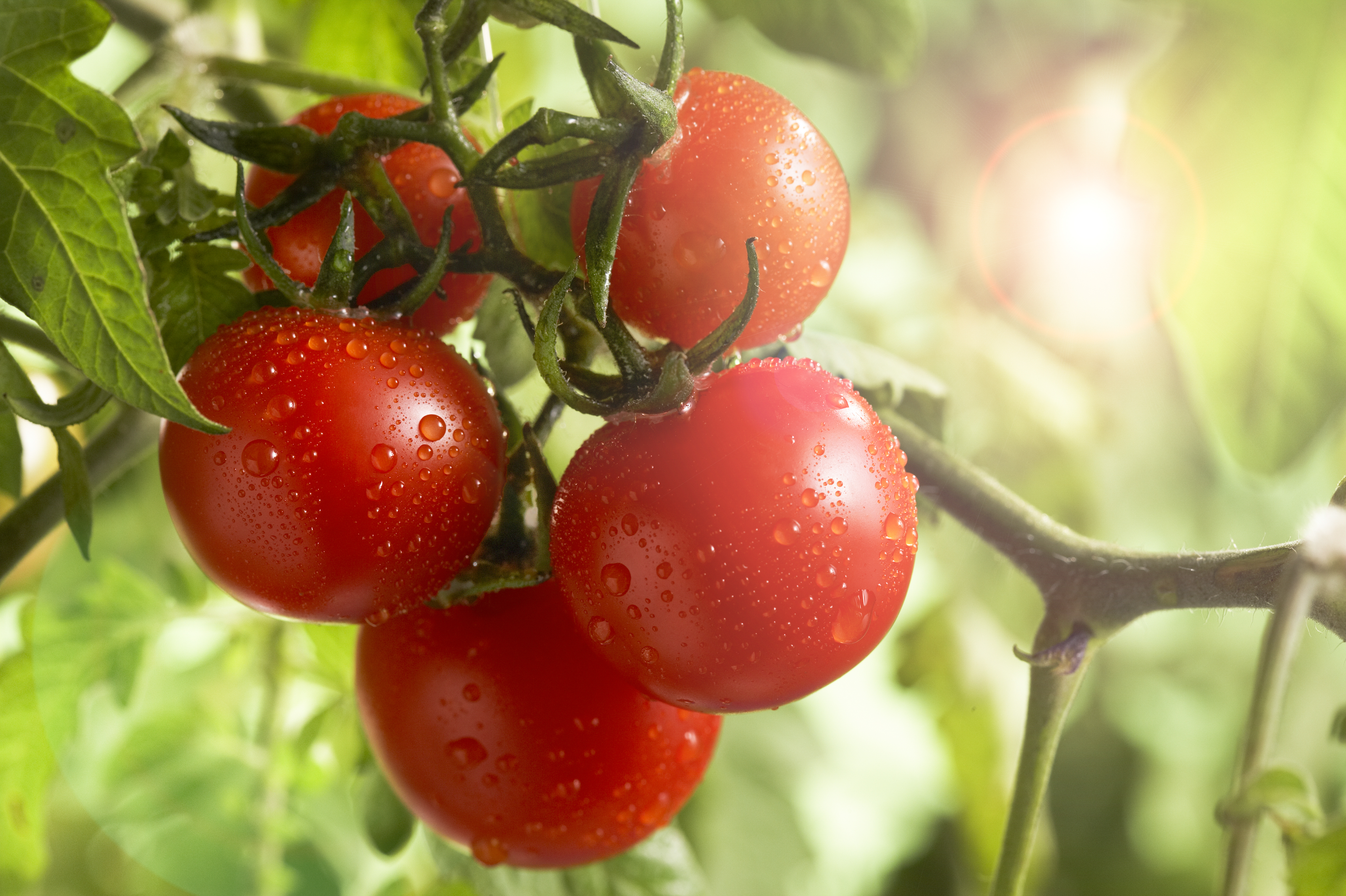 Preserve Your Extra Tomatoes With This Super Simple Hack