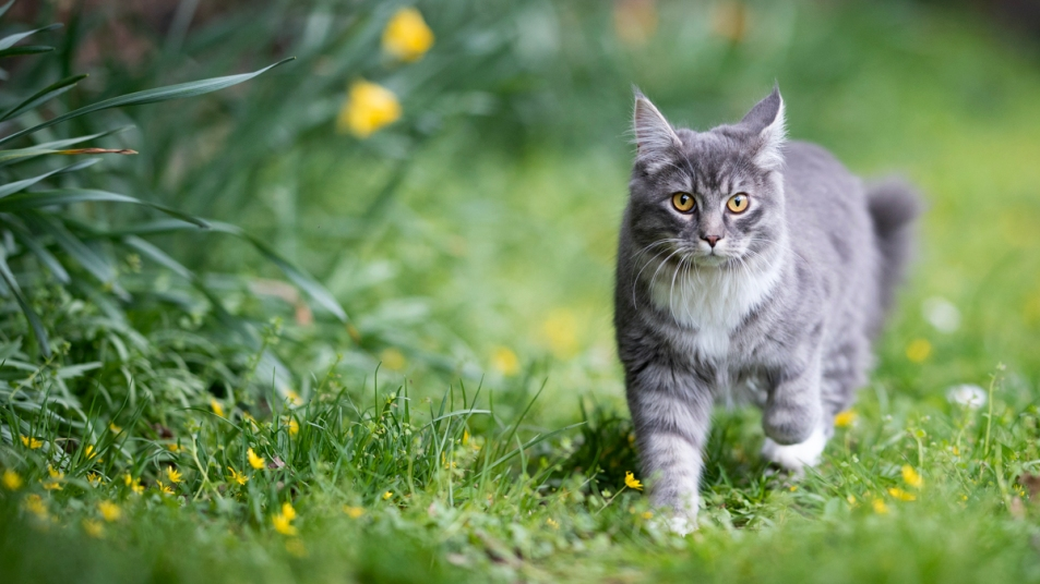 Cat walking around grass