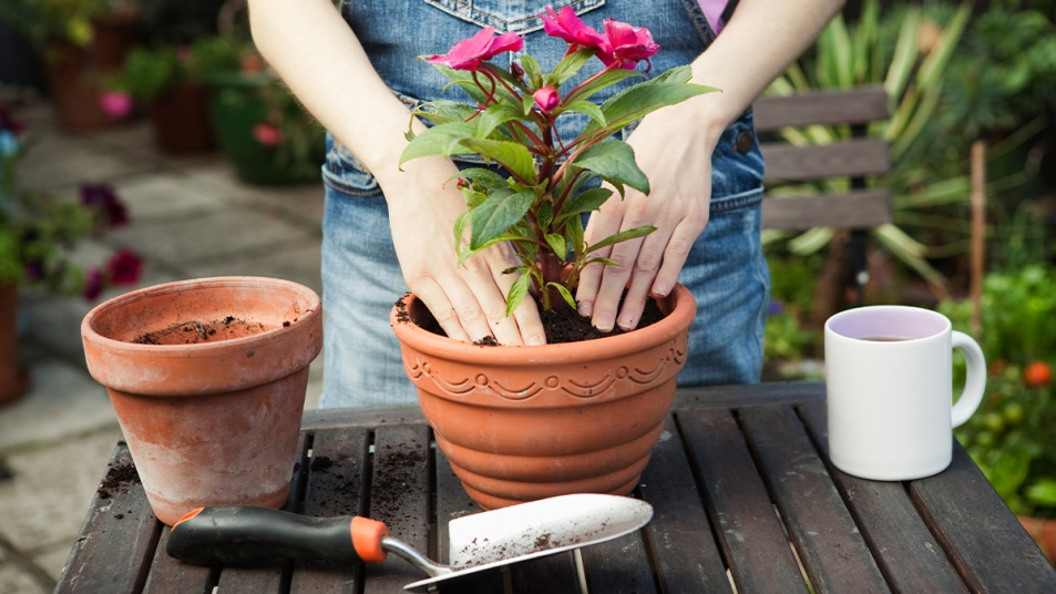 Best plant pot HTL synd image