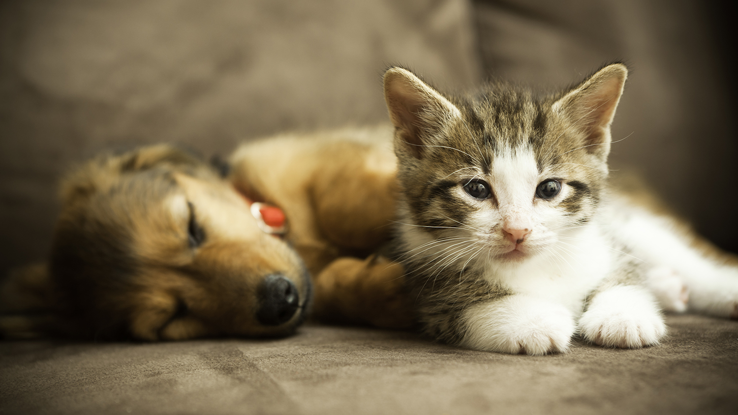 These 5 Tricks Will Help Keep Your Home Pet Fur-Free