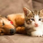 pets on sofa