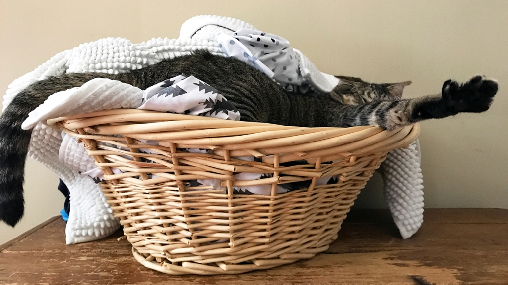 Cat stretching in a laundry basket