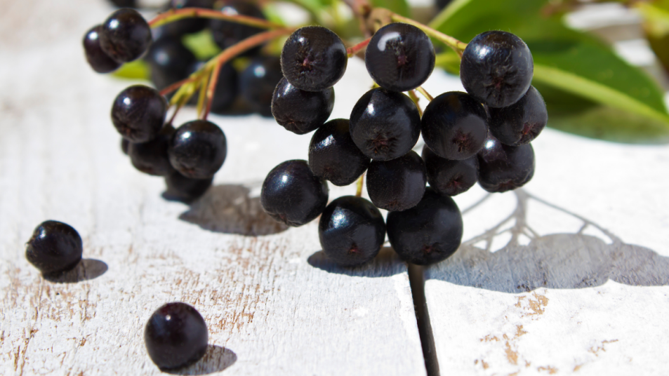 chokeberry-fruit-lower-blood-pressure-cellulite
