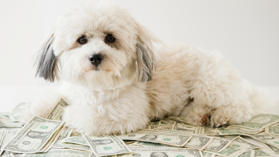 cute white dog sitting on a pile of dollar bills